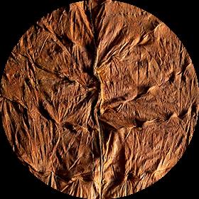 Piloto Cubano tobacco