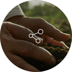 Tobacco plant Soil